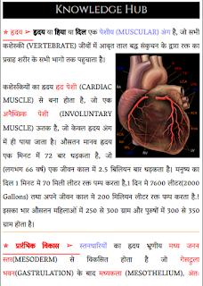 ह्रदय  की संरचना