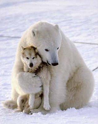 a-lobo+y+oso-amor.jpg