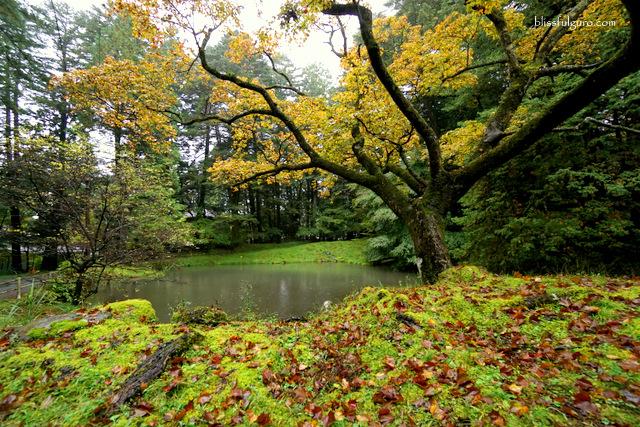 Autumn Nikko Japan Blog