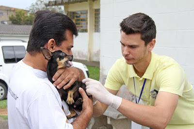 Registro-SP vacina mais de 13 mil cães e gatos contra a raiva