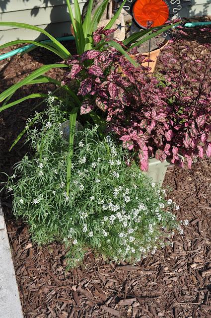 spirea, steins, planting, gardening, diy, landscaping, fieldstone, stone, field, free, grasses, burning bushes, home depot