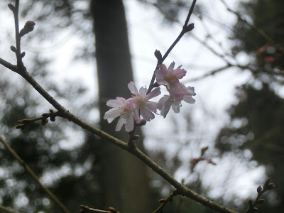 東慶寺の十月桜