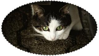 Кошка Винни