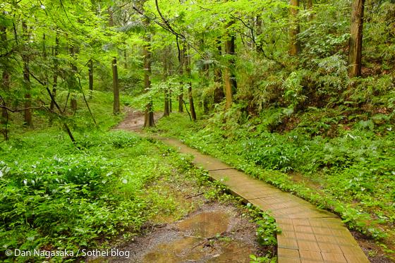 大池の先の散策路