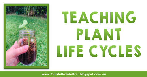 Explore the plant life cycle with these handy set by step lesson idea for teachers. Perfect for early years students. Teaching resources you can download today.
