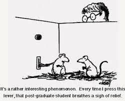 ABCs of DumbDown: The ABCs of Rat Psychology