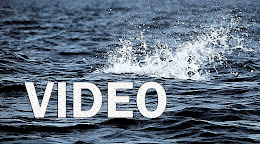 Maldives Fishing videos