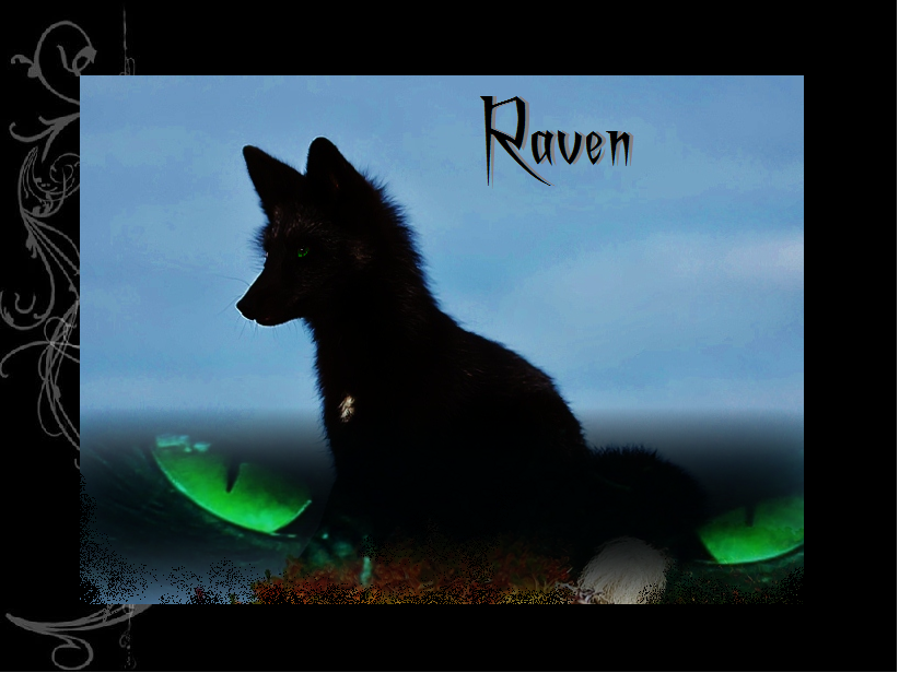 black wolf with green eyes - photo #27
