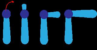 bentuk kromosom