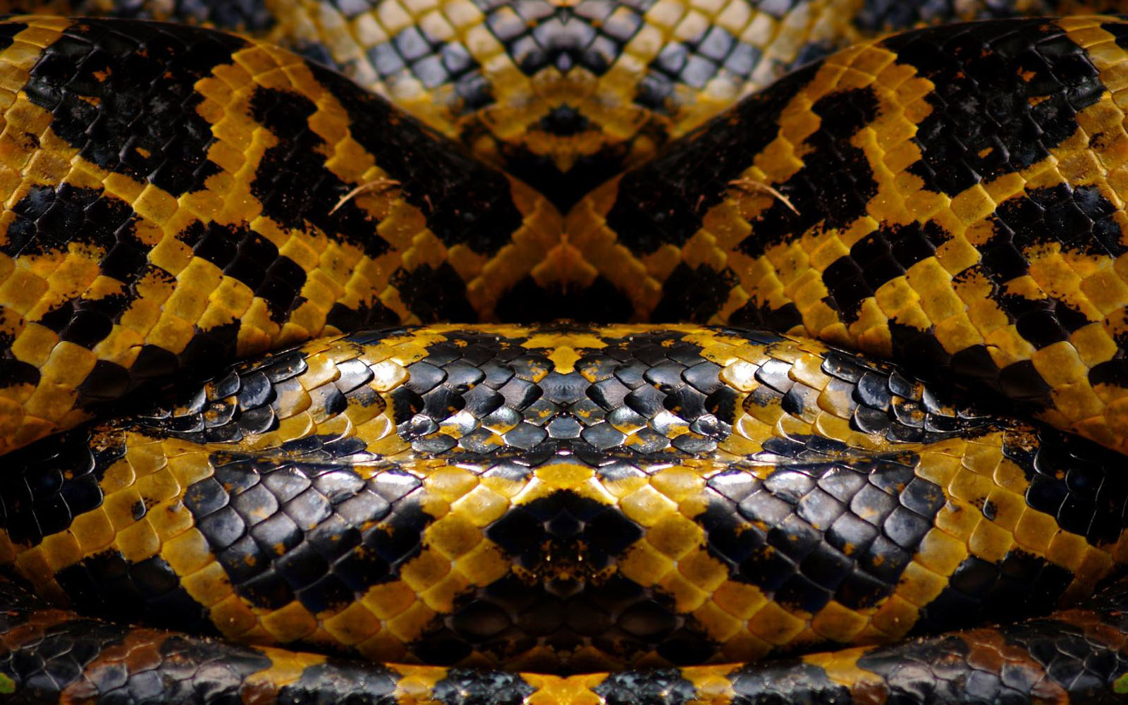 Snake Eyes Hd Wallpapers Wallpapers Snake Skin Wallpapers