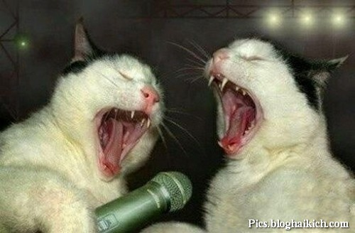 Mèo hát karaoke