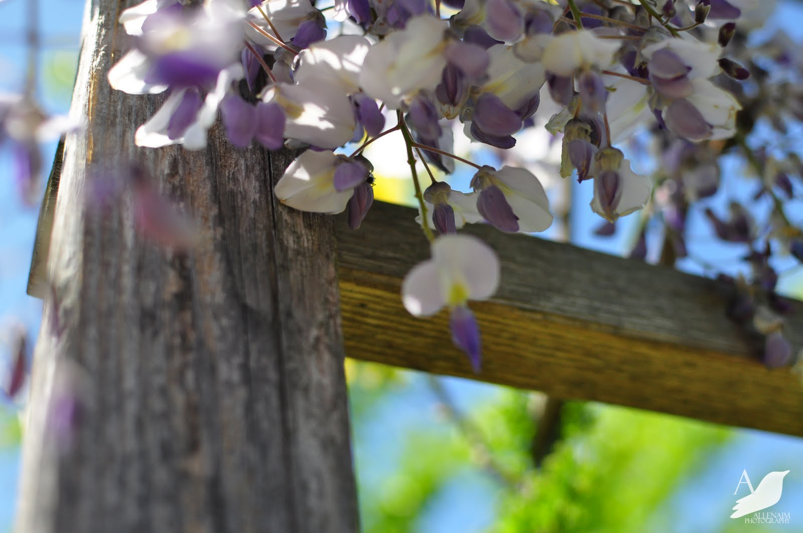 Garden Blogger's Bloom Day at A Nest for All Seasons