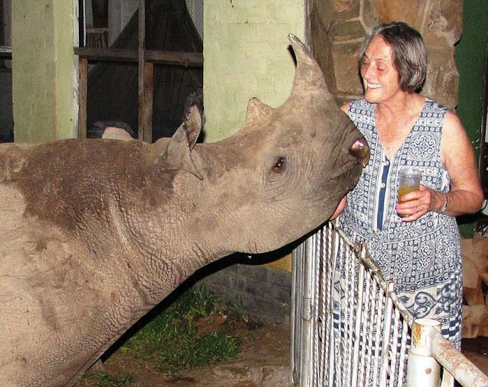 Family Adopts Orphaned Baby Rhino Cool Damn Pictures