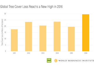 """Tree cover loss is not the same as deforestation. """"Tree cover"""" can refer to trees in plantations as well as natural forests, and """"tree cover loss"""" is the removal of tree canopy due to human or natural causes, including fire.(Credit: World Resources Institute) Click to Enlarge."""