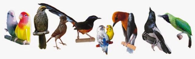 Berbagai Jenis Jenis Burung Murah Yang Banyak Di Cari Pada Saat Sekarang Ini