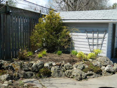 Scarborough Toronto rock garden after removing weeping mulberry by garden muses-not another Toronto gardening blog