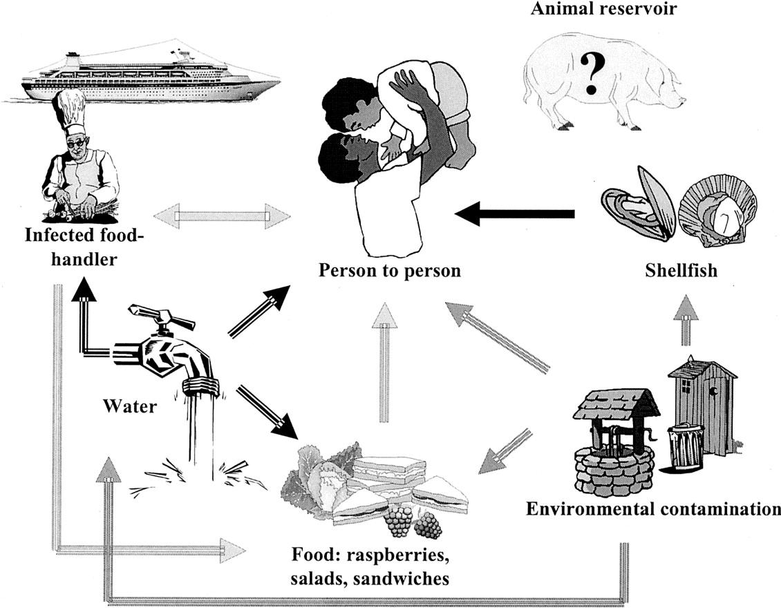 China Agua Engarrafada Contaminada Provoca Surto De