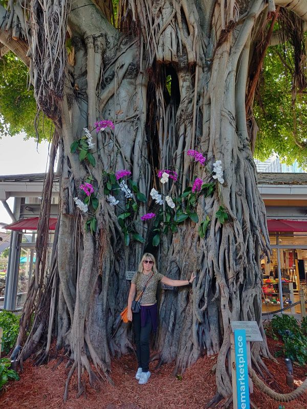 albero secolare marketplace di downtown miami