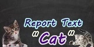 Google Image - Contoh Report text Tentang Cat Dalam Bahasa Inggris Dan Artinya