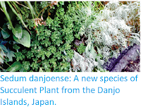 http://sciencythoughts.blogspot.co.uk/2017/06/sedum-danjoense-new-species-of.html