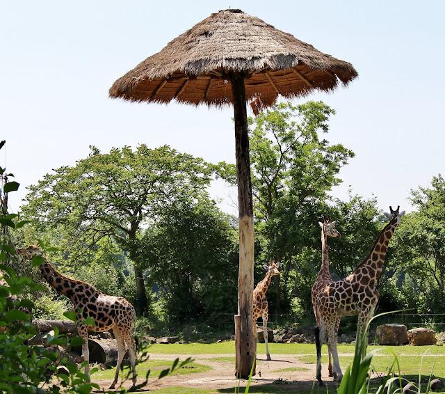 Kiwara Kopje Zoo Leipzig
