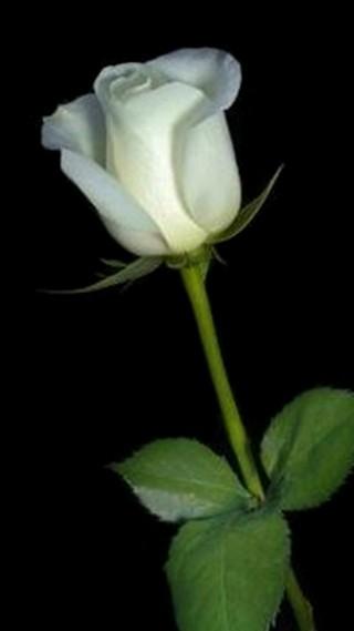 An Ordinary Woman Bunga Mawar