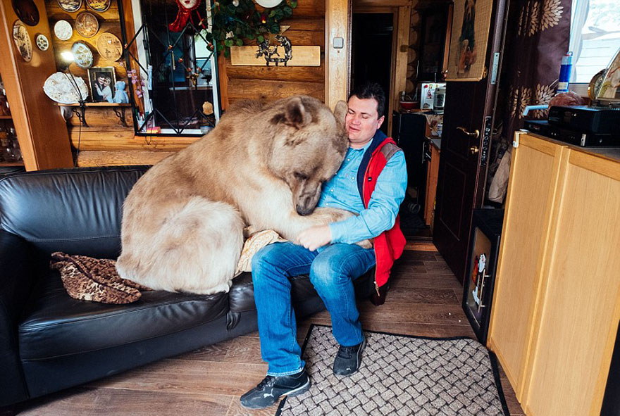 Russian Couple Adopted An Orphaned Bear 23 Years Ago, And They Still Live Together - He was found by hunters in a forest very weak and lonely