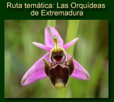http://iberian-nature.blogspot.com.es/p/ruta-tematica-orquideas-de-extremadura.html