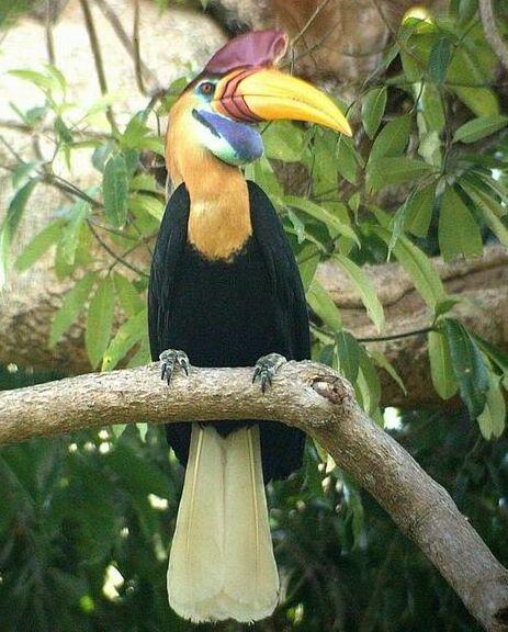 Download 42+ Foto Gambar Burung Julang Sulawesi HD Terbaru Gratis