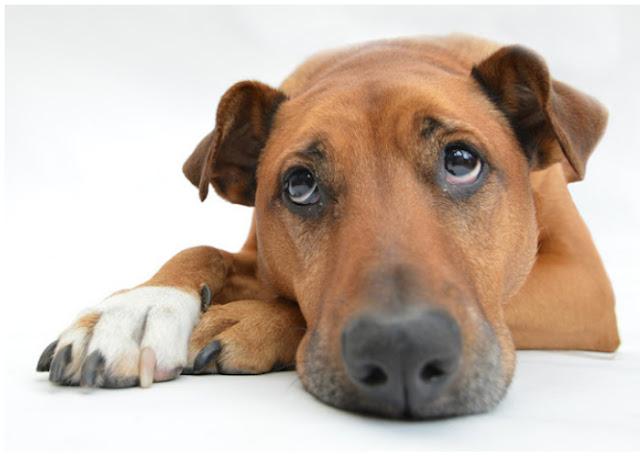 Arthritis Medicine For Dogs