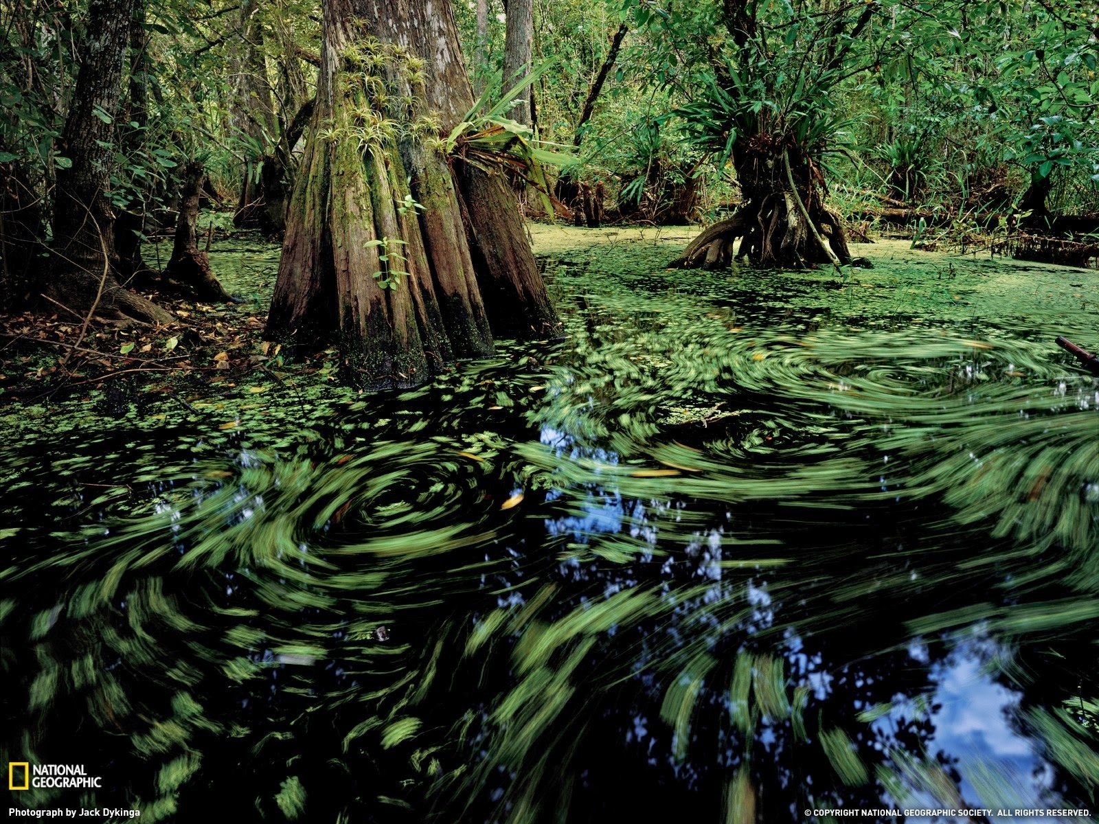 Wallpaper High Definition Hd Free Wallpaper Hd Beautiful Green Swamp