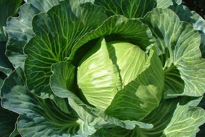 Inilah Manfaat Sayuran Kubis Untuk Kesehatan Tubuh
