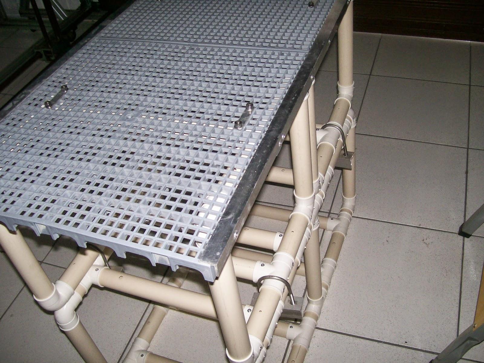 plataformas para caes em piscinas