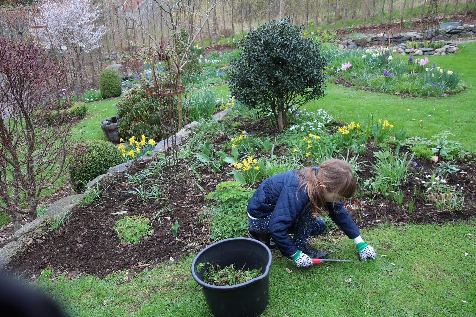 bekämpa maskrosor i trädgården