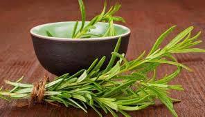 فوائد نبات الروزمارى للانسان والشعر