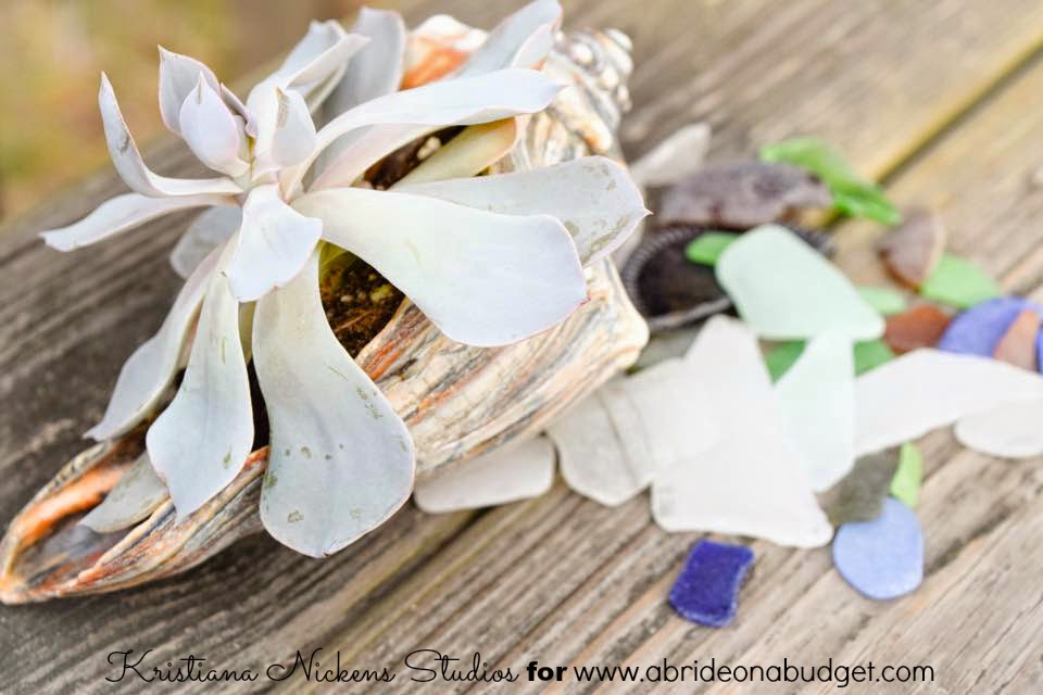 Succulets in shells are the perfect wedding centerpieces and favors. Find out how to DIY them at www.abrideonabudget.com.