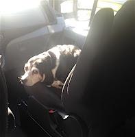Beagle in a Fuse