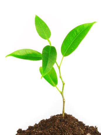 conoce algunos mecanismos de defensa de las plantas