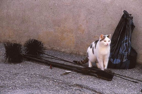 cat with broomsticks