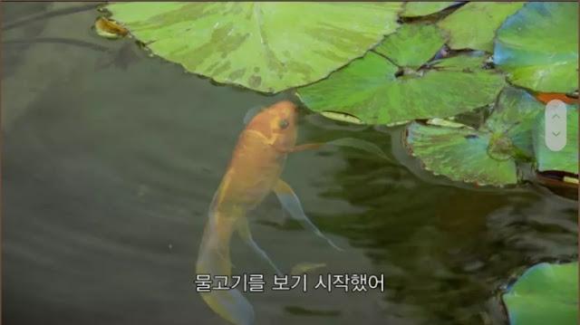 fmkorea_com_20200427_164359.jpg
