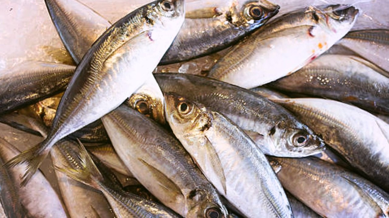 Fresh tuna supplier supplier tuna indonesia tuna factory for Safe fish for pregnancy