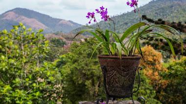 Orquideario de Soroa. Conservando orquídeas