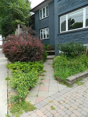 Leslieville Front Garden Cleanup Before by Paul Jung Gardening Services--a Toronto Gardening Company