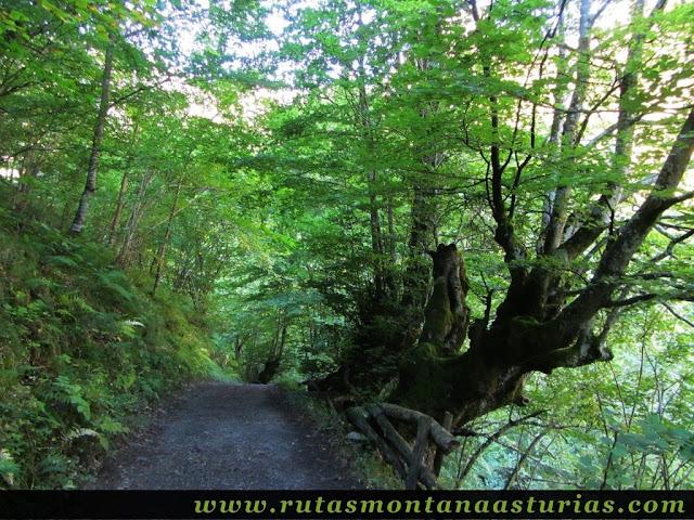 Ruta de los Arrudos y Corteguerón: Camino entre árboles