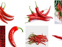 Cara Budidaya Cabe Merah