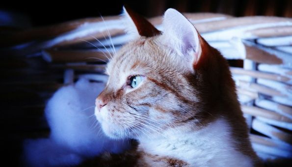 Gatos predicen sismo en Japón segundos antes de que suceda
