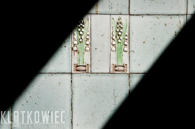 Szczecin: w maju kwitną konwalie