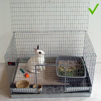 Pembuatan Kandang Kelinci Di Dalam Ruangan