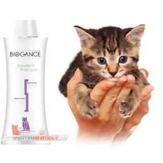 Cumpara aici samponul  pentru pisici care ii scapa de purici si capuse