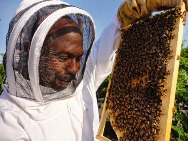 Long Beach Beekeepers - News